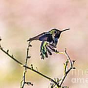 Hummingbird Stretch Art Print
