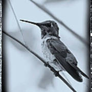 Hummingbird With Old-fashioned Frame 1 Art Print