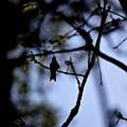 Hummingbirds 326 Art Print