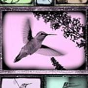 Hummingbirds In Old Frames Collage Art Print