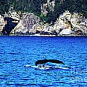 Humpback Whale Alaska Art Print