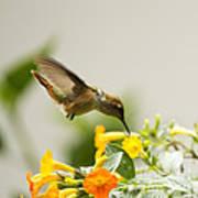 Hungry Flowerbird Art Print