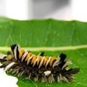 Hungry Hairy Caterpillar Art Print