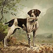 Hunting Dog Circa 1879 Art Print by Aged Pixel