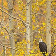 Hunting From An Aspen Art Print