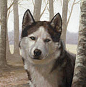 Husky In The Woods Art Print by John Silver