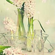 Hyacinth Arrangement Art Print
