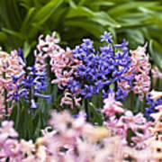 Hyacinth Garden Art Print