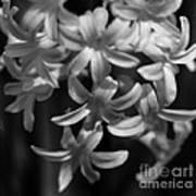 Hyacinth In Black And White Art Print
