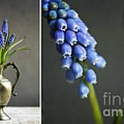 Hyacinth Still Life Art Print