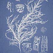Hyalosiphonia Caespitosa Okamura Art Print by Aged Pixel