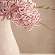 Hyazinth In A Vase Art Print