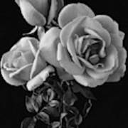 Hybrid Tea California Roses Art Print