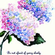 Hydranga Poem Art Print