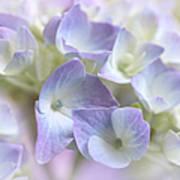 Hydrangea Floral Macro Art Print