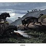 Hyena Art Print