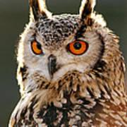 Hypnoteyes  Eurasian Eagle Owl Art Print