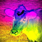 I Think I Am The Most Colorful Cow You Know  Art Print