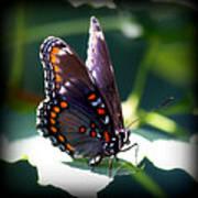 I Butterfly Art Print