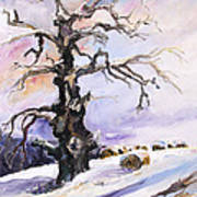 I Have Got Stories To Tell Old Oak Tree In Mecklenburg Germany Art Print