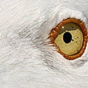 I Have My Eye On You Art Print