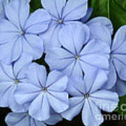 I Love Blue Flowers Art Print