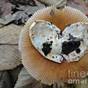 I Love Mushrooms Art Print