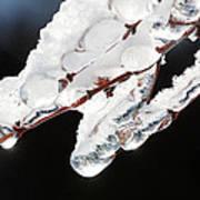 Ice And Snow-5537 Art Print