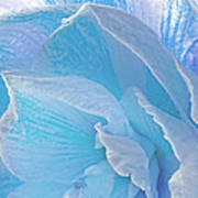 Ice Blue Amaryllis Abstract Art Print