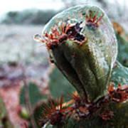 Ice Cactus Art Print