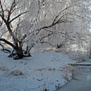 Ice Covered Tree And Creek In Montana Art Print