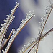 Ice Crystals On Fireweed Fairbanks  Alaska By Pat Hathaway 1969 Art Print