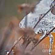 Ice Drop Art Print