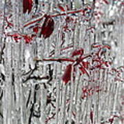 Ice Fence Art Print