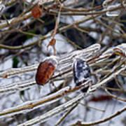Ice Incased Leaves Art Print