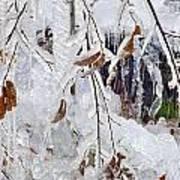Ice Leaves Art Print