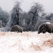 Ice Storm And Hay Bales In The Blue Rdige Mountains Art Print