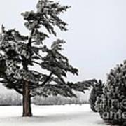 Ice Storm Scenery Art Print