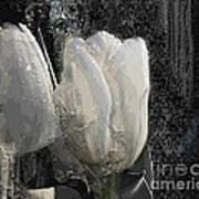 Ice Tulip  Art Print