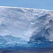 Iceberg With Cape Petrel Art Print