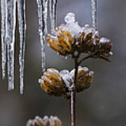 Icicles And Ice Flowers Art Print