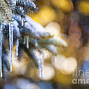 Icicles On Fir Tree In Winter Art Print