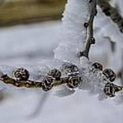 Icy Branch Art Print