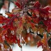 Icy Oak Art Print