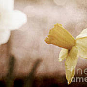 If These Flowers Could Speak  Art Print