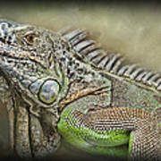 Iguana Named Mack Art Print