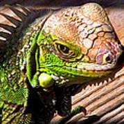 Iguana On The Deck At Mammacitas Art Print