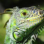 Iguana Smile Art Print