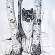 Ihasa In The Woods Art Print by Joette Snyder