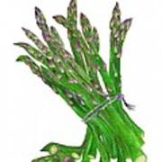 Illustration Of Asparagus Art Print